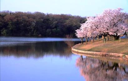 Suhara_park_2
